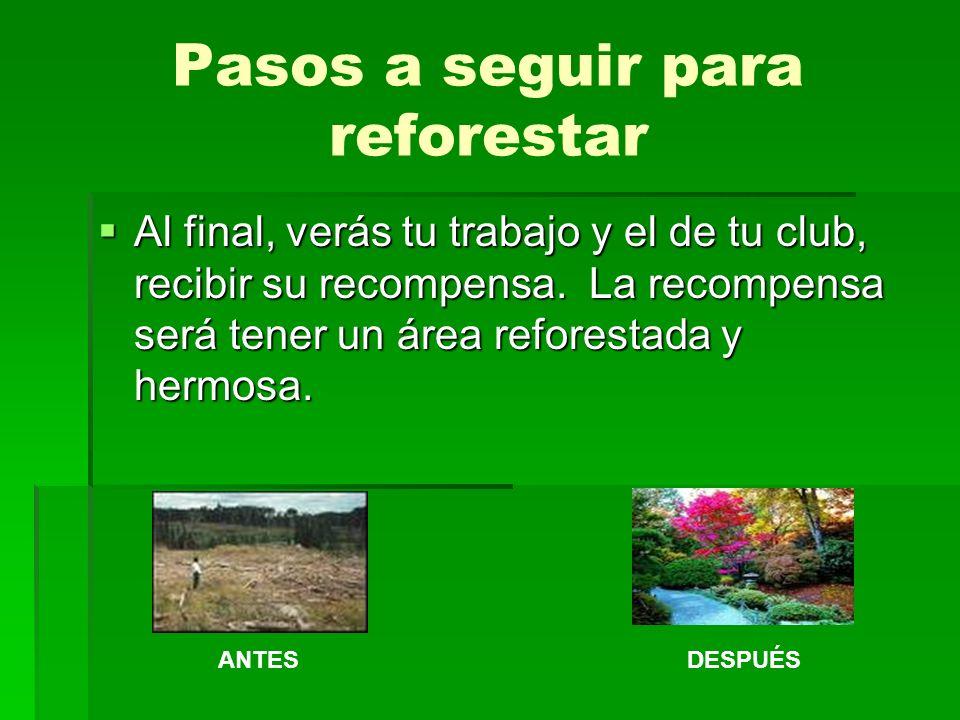 Pasos a seguir para reforestar