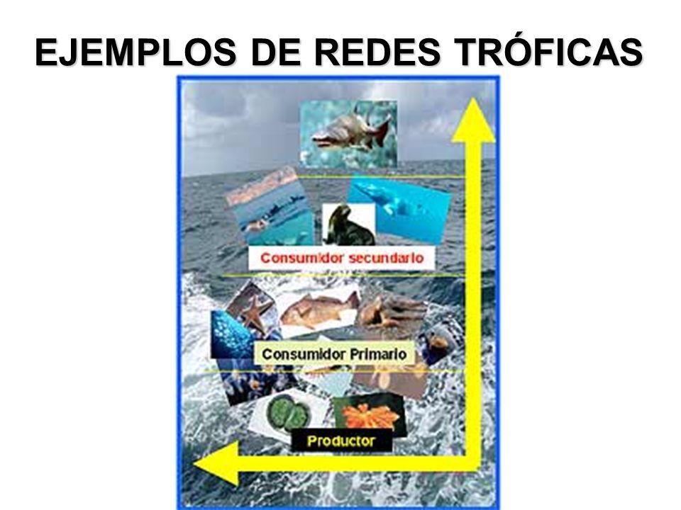 EJEMPLOS DE REDES TRÓFICAS