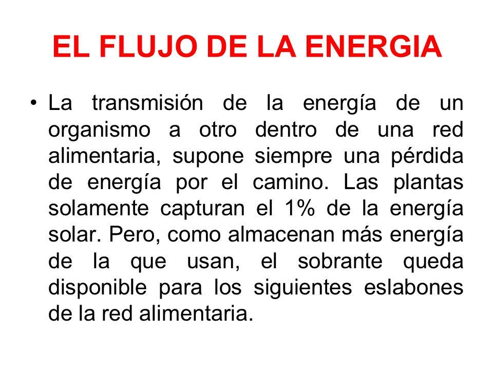 EL FLUJO DE LA ENERGIA