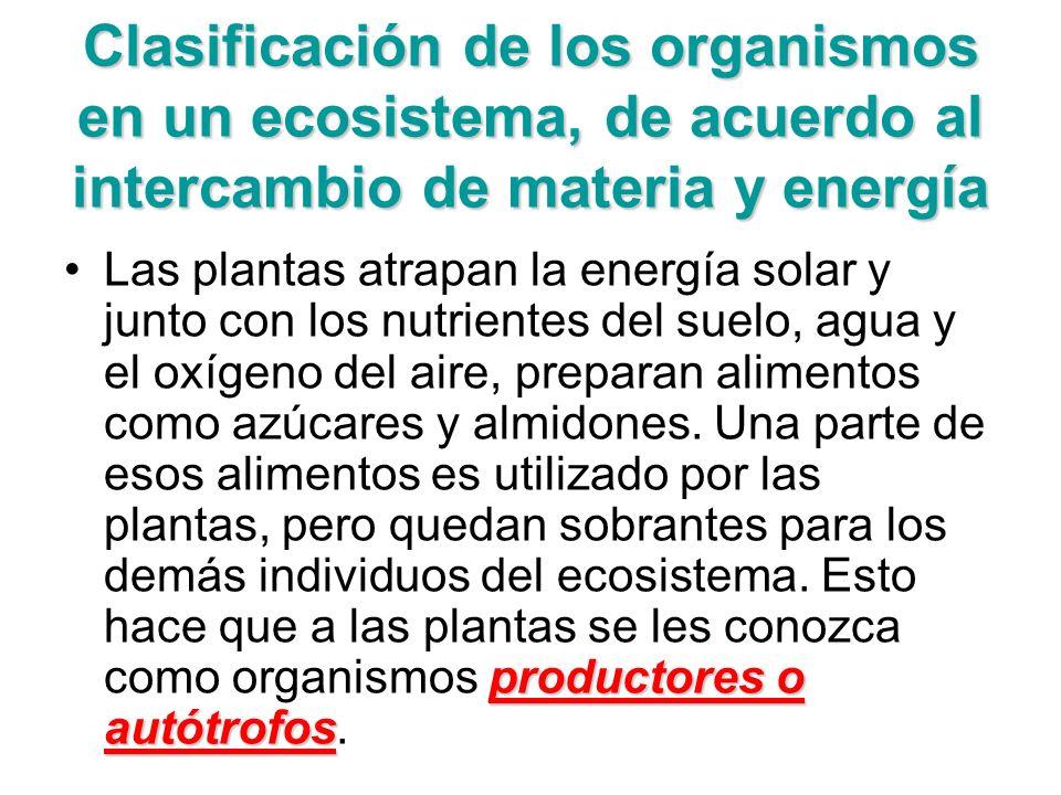 Clasificación de los organismos en un ecosistema, de acuerdo al intercambio de materia y energía
