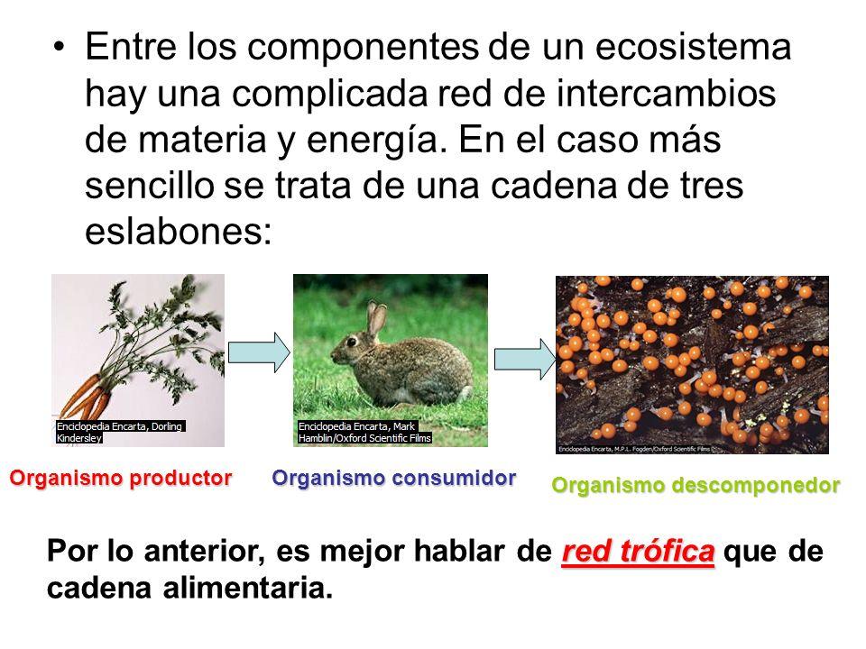 Entre los componentes de un ecosistema hay una complicada red de intercambios de materia y energía. En el caso más sencillo se trata de una cadena de tres eslabones: