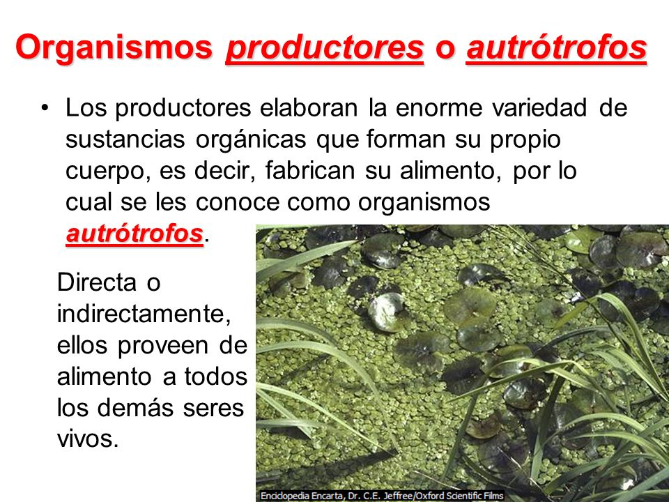 Organismos productores o autrótrofos