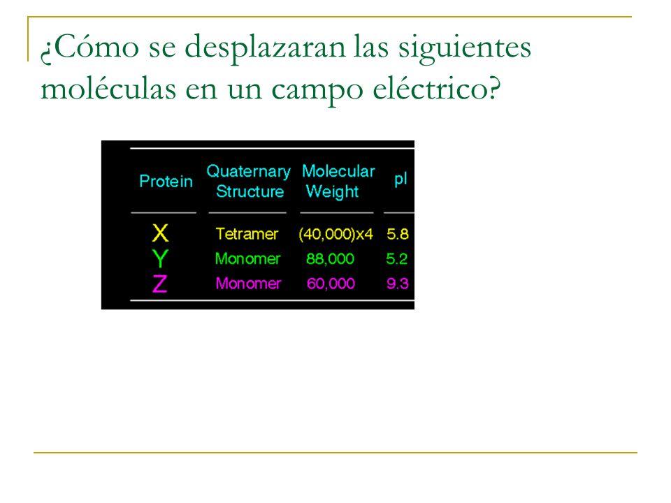 ¿Cómo se desplazaran las siguientes moléculas en un campo eléctrico