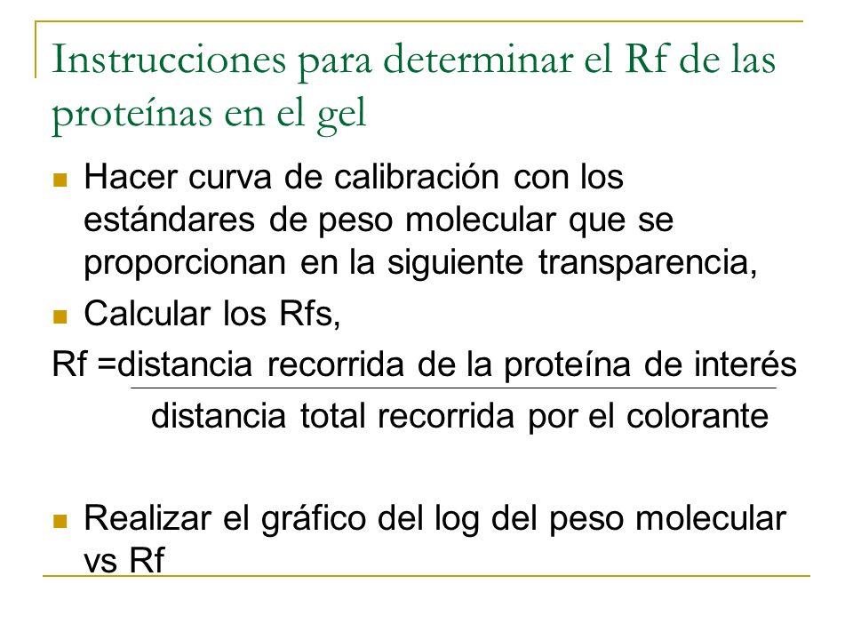 Instrucciones para determinar el Rf de las proteínas en el gel