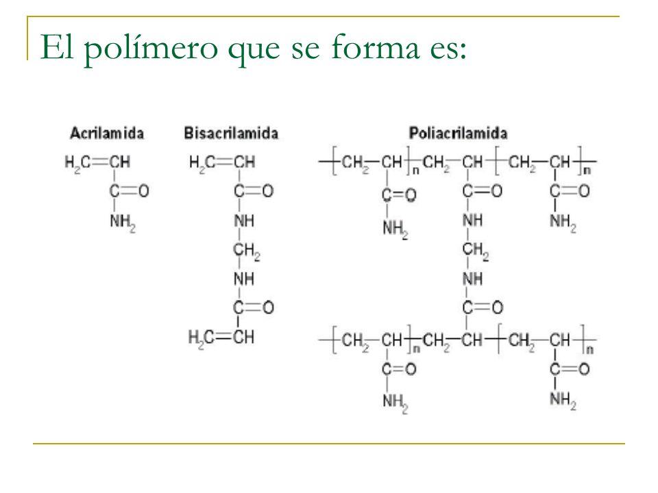El polímero que se forma es: