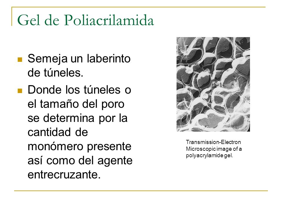 Gel de Poliacrilamida Semeja un laberinto de túneles.
