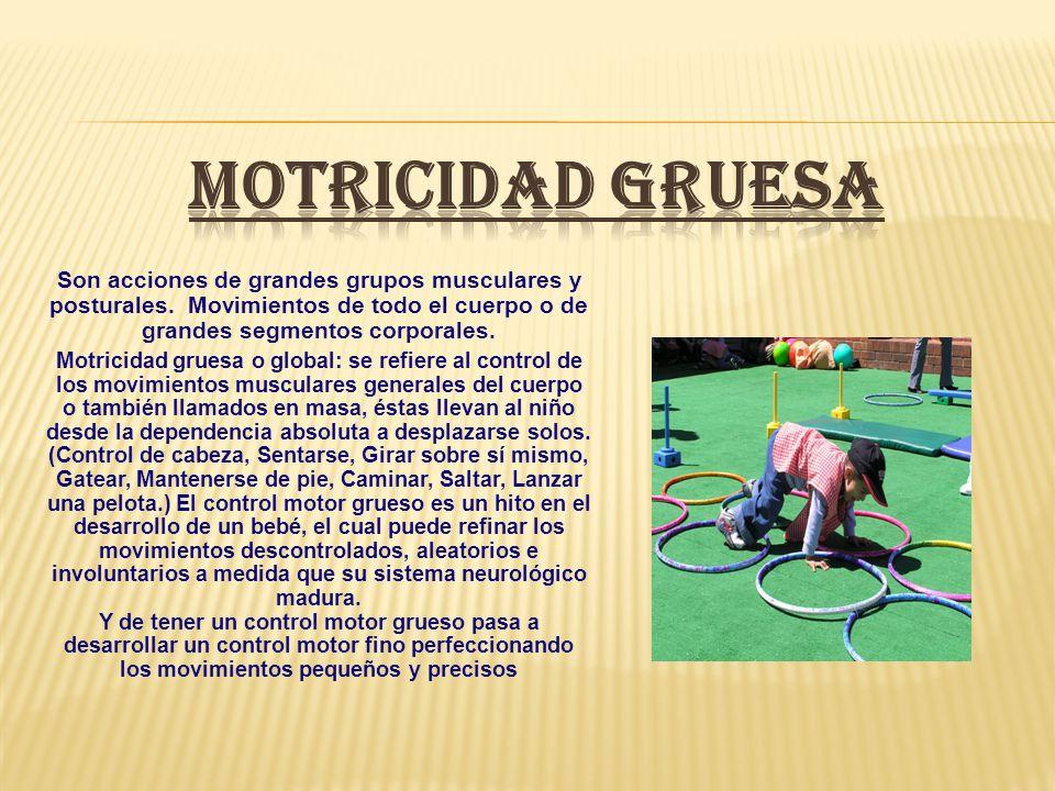 MOTRICIDAD GRUESA Son acciones de grandes grupos musculares y posturales. Movimientos de todo el cuerpo o de grandes segmentos corporales.