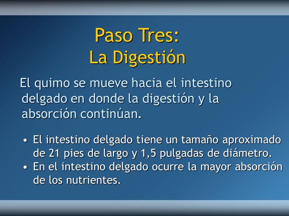 Paso Tres: La Digestión