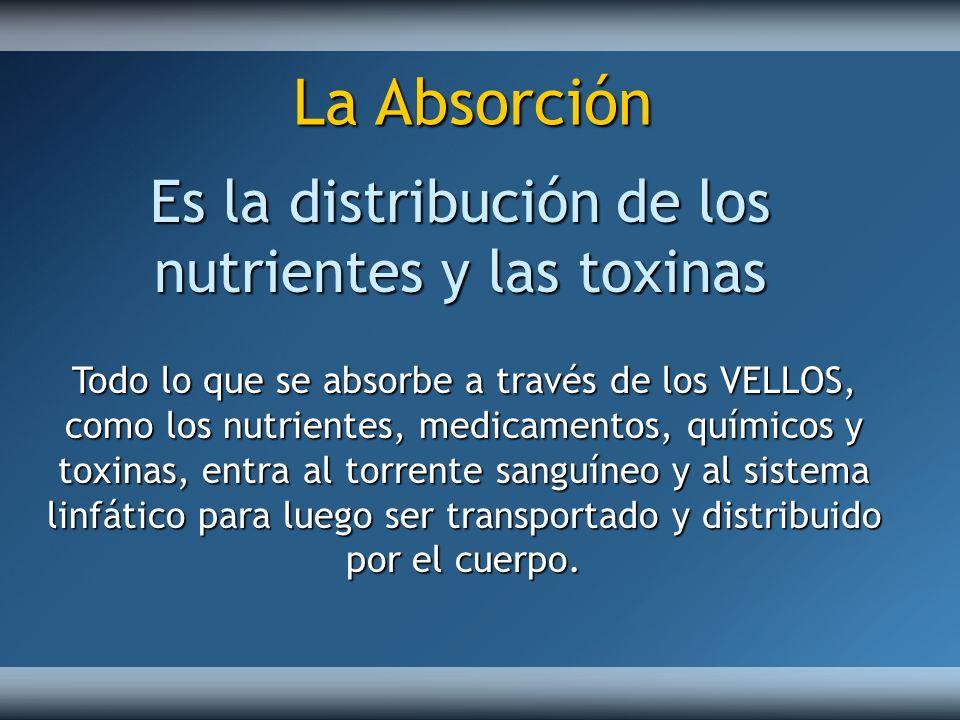 Es la distribución de los nutrientes y las toxinas