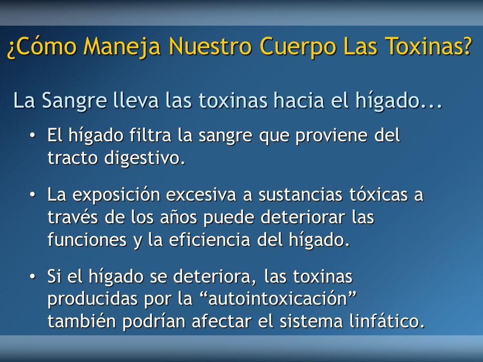 ¿Cómo Maneja Nuestro Cuerpo Las Toxinas