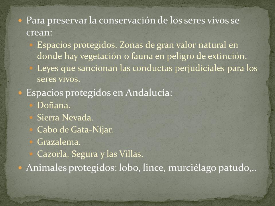 Para preservar la conservación de los seres vivos se crean: