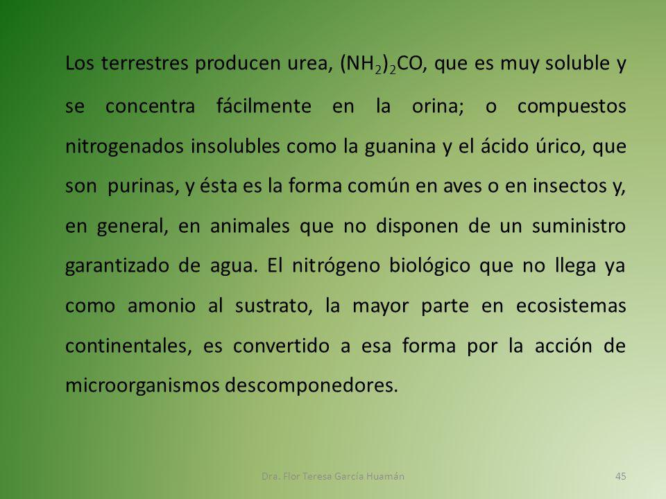 acido urico valores normales embarazo comida anti acido urico como tratar a crise de gota