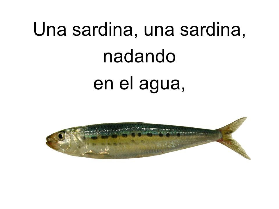 Una sardina, una sardina,