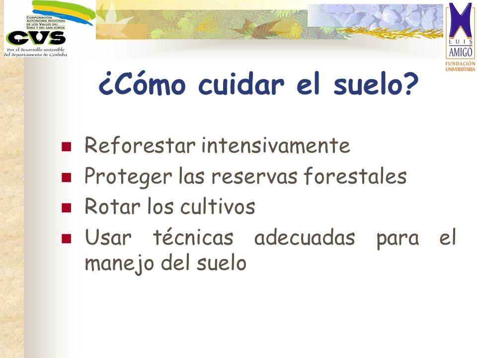 ¿Cómo cuidar el suelo Reforestar intensivamente