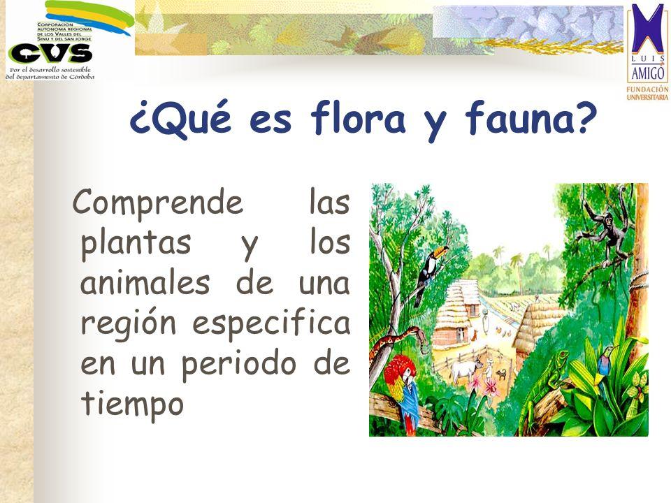 ¿Qué es flora y fauna.