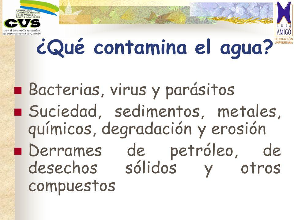 ¿Qué contamina el agua Bacterias, virus y parásitos