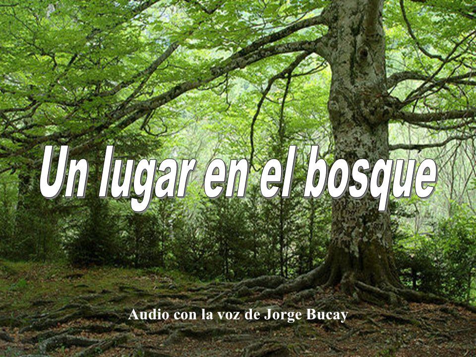 Un lugar en el bosque Audio con la voz de Jorge Bucay