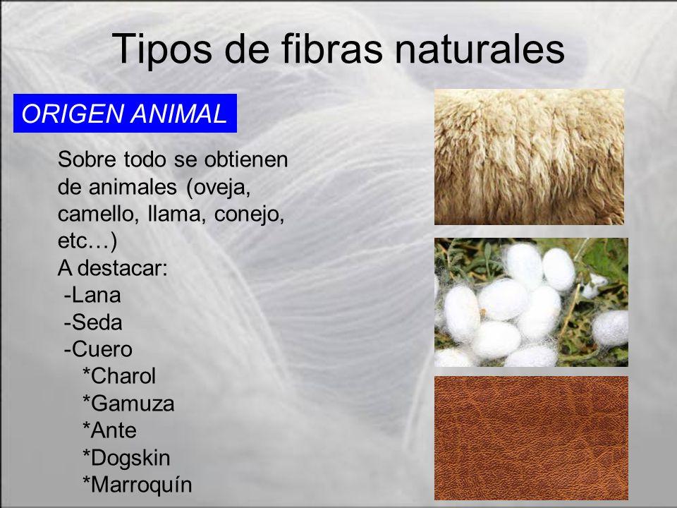 Fibras textiles por ignacio vadillo alberto ordaz ppt video online descargar - Informacion sobre la fibra vegetal ...