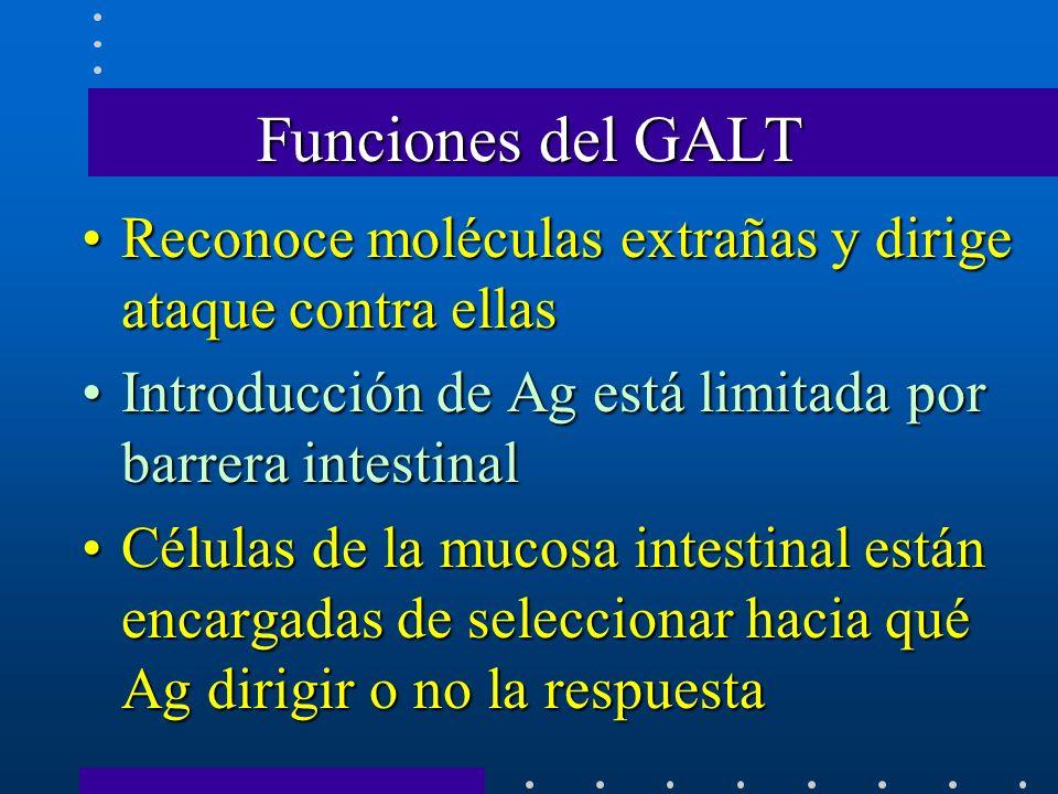 Funciones del GALT Reconoce moléculas extrañas y dirige ataque contra ellas. Introducción de Ag está limitada por barrera intestinal.