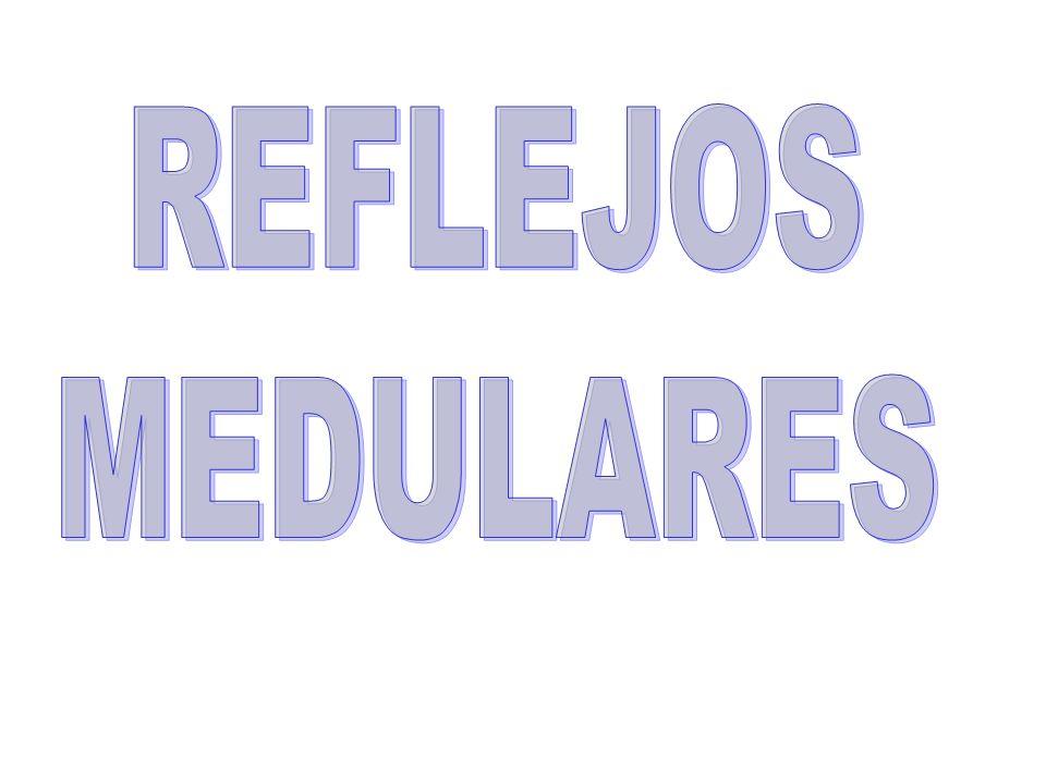 REFLEJOS MEDULARES