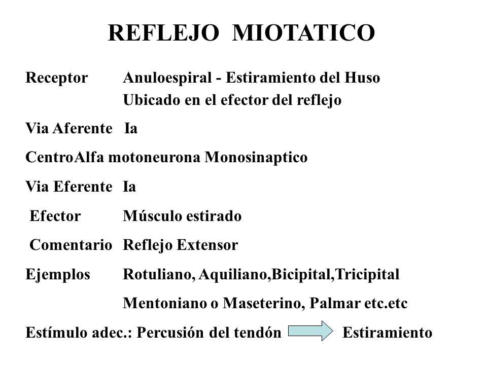 REFLEJO MIOTATICO Receptor Anuloespiral - Estiramiento del Huso