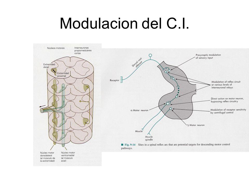Modulacion del C.I.