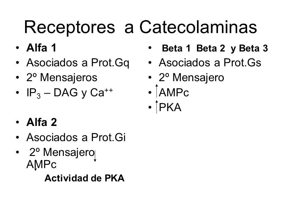 Receptores a Catecolaminas