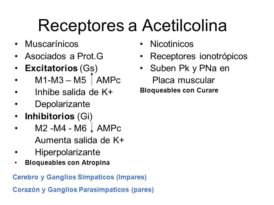 Receptores a Acetilcolina