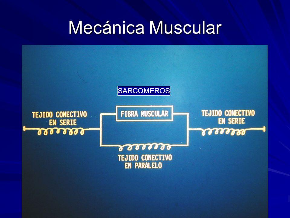 Mecánica Muscular SARCOMEROS