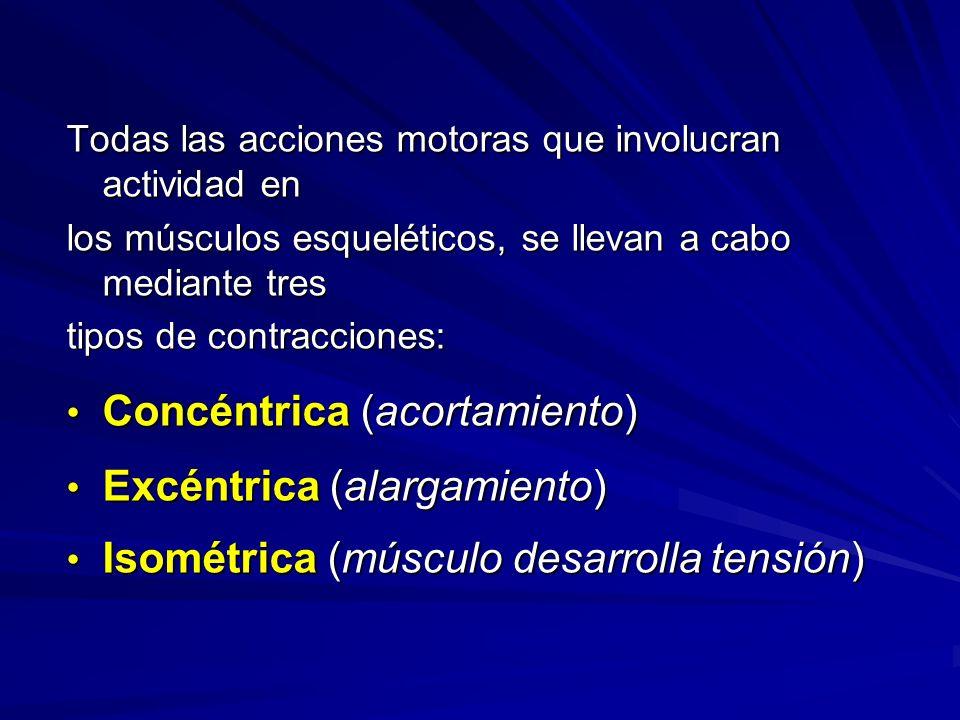 Concéntrica (acortamiento) Excéntrica (alargamiento)