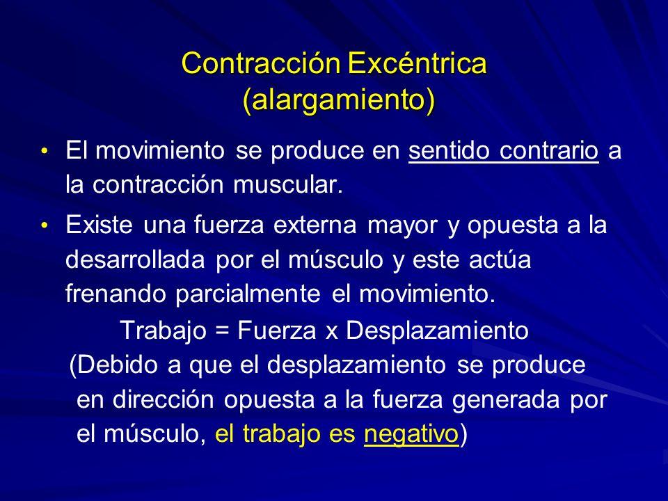 Contracción Excéntrica (alargamiento)
