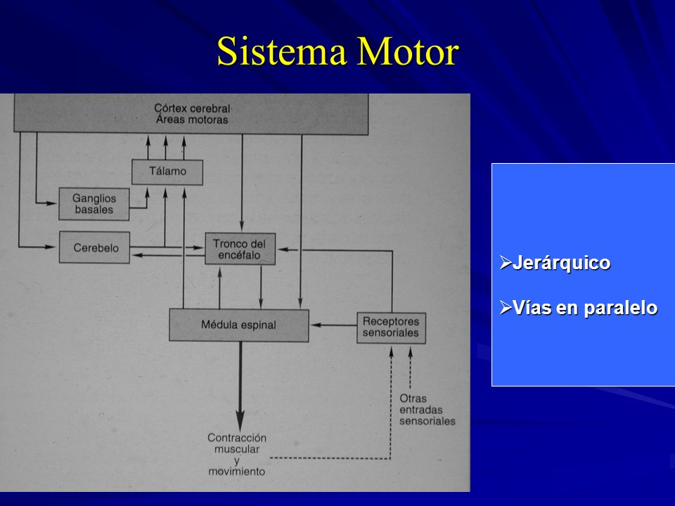 Sistema Motor Jerárquico Vías en paralelo