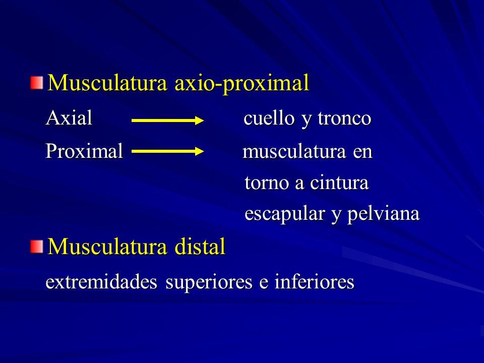 Musculatura axio-proximal