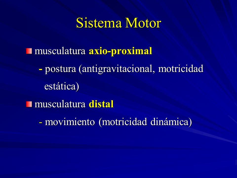 Sistema Motor musculatura axio-proximal