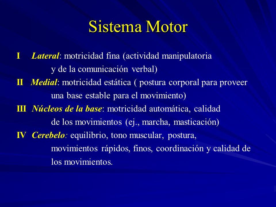 Sistema Motor I Lateral: motricidad fina (actividad manipulatoria