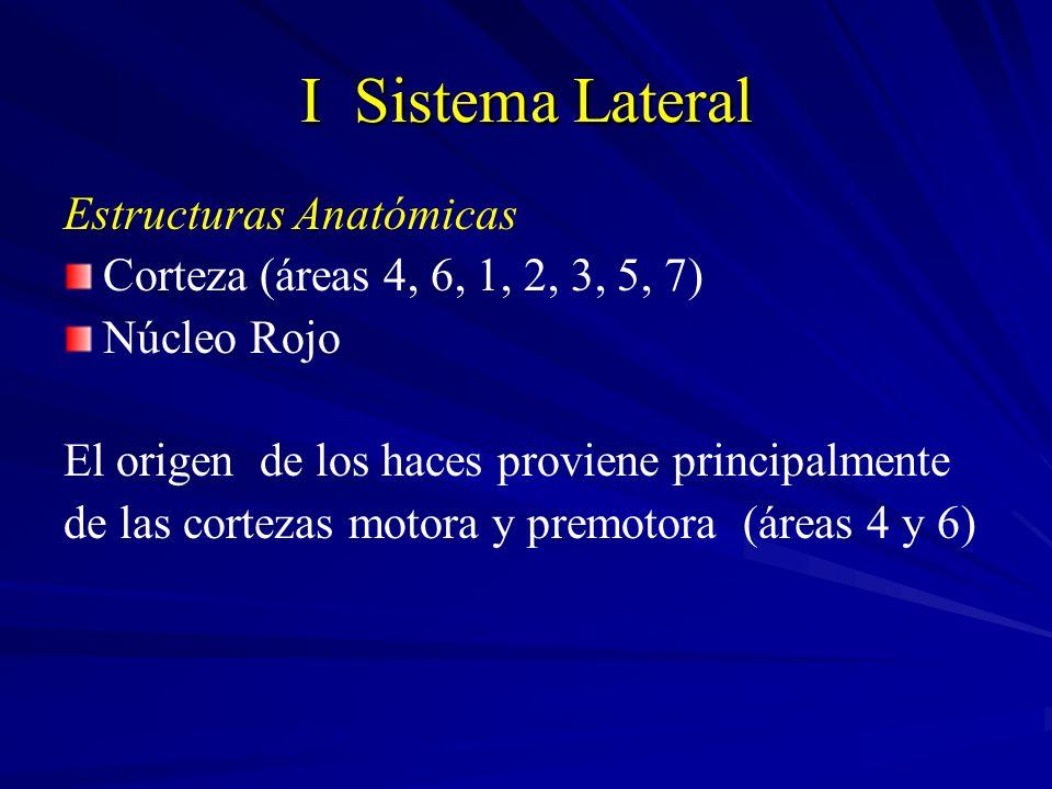 I Sistema Lateral Estructuras Anatómicas