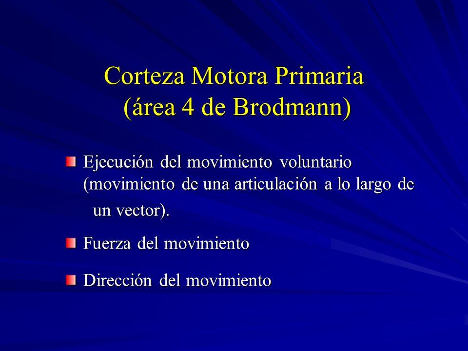 Corteza Motora Primaria (área 4 de Brodmann)