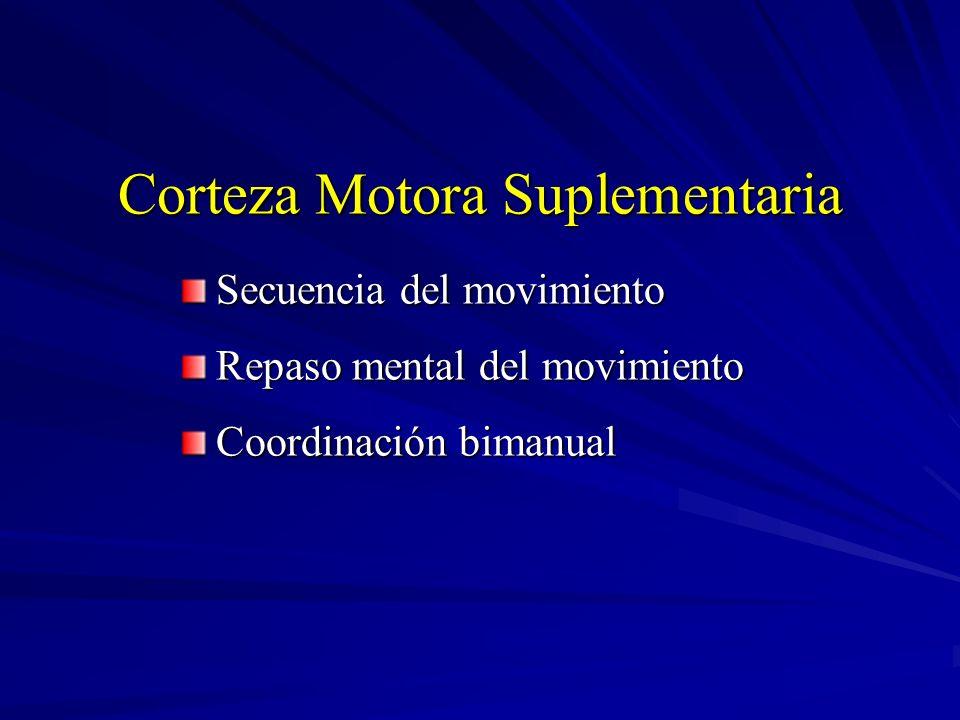 Corteza Motora Suplementaria