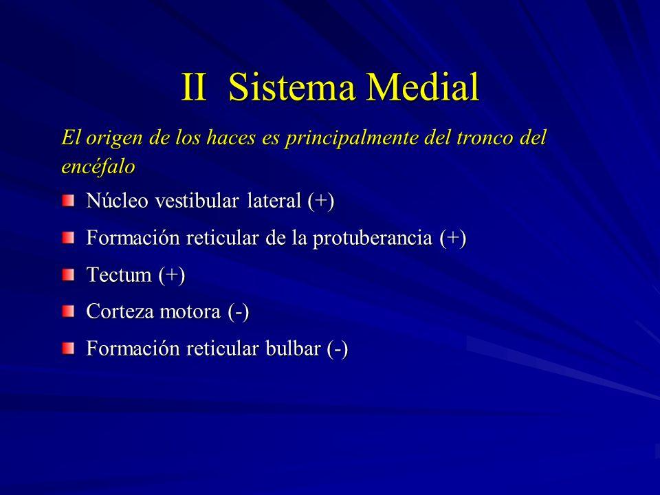 II Sistema Medial El origen de los haces es principalmente del tronco del. encéfalo. Núcleo vestibular lateral (+)
