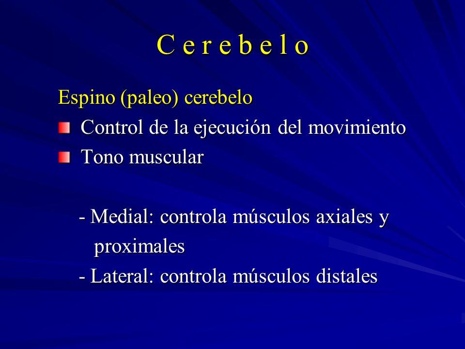 C e r e b e l o Espino (paleo) cerebelo