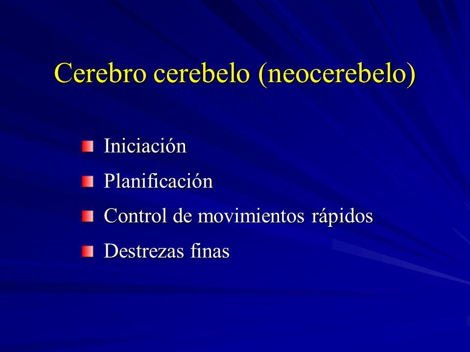 Cerebro cerebelo (neocerebelo)