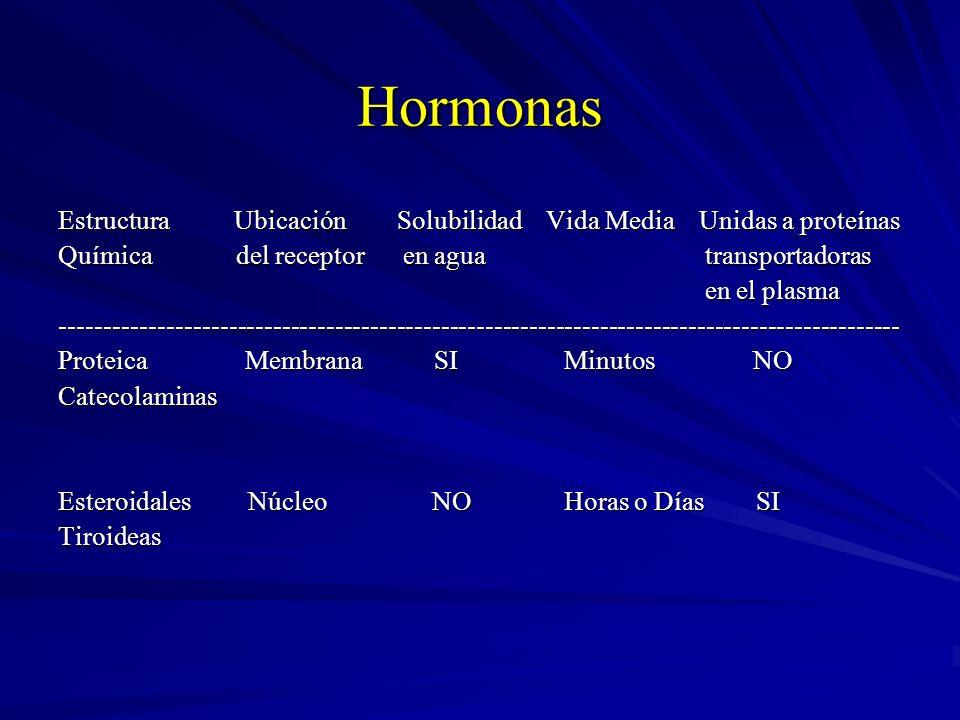 Hormonas Estructura Ubicación Solubilidad Vida Media Unidas a proteínas.