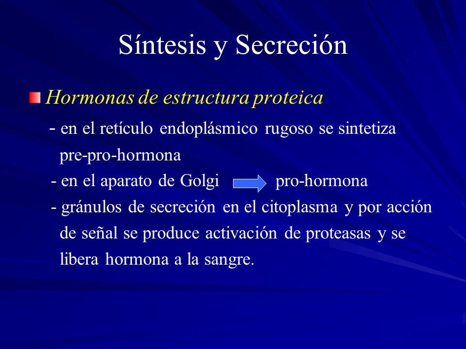 Síntesis y Secreción Hormonas de estructura proteica