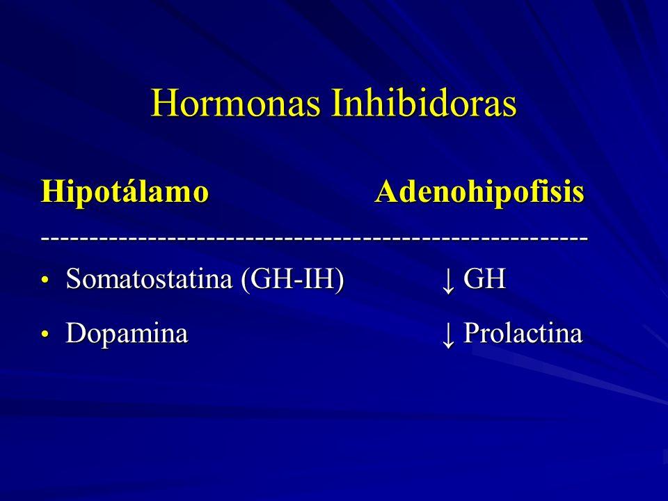Hormonas Inhibidoras Hipotálamo Adenohipofisis