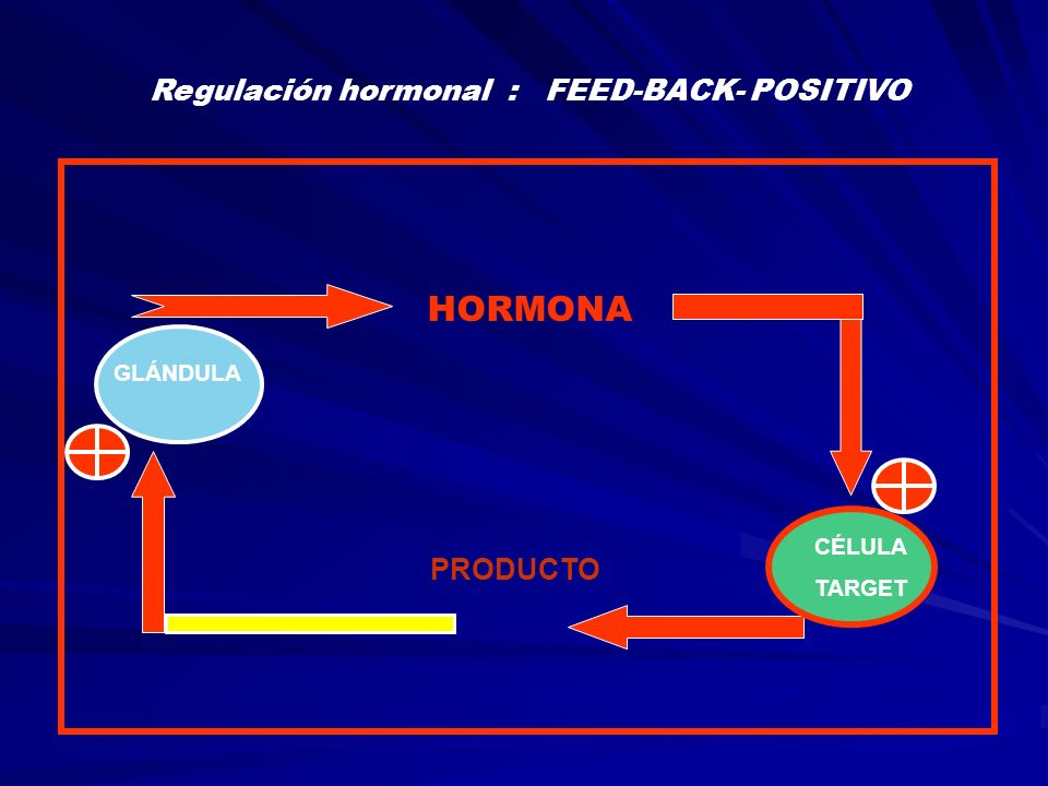 Regulación hormonal : FEED-BACK- POSITIVO