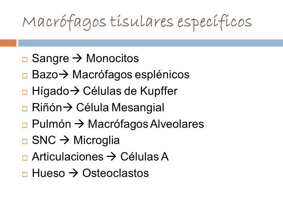 Macrófagos tisulares específicos