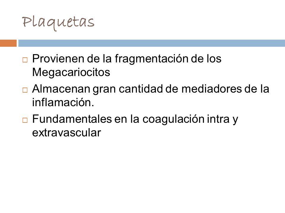 Plaquetas Provienen de la fragmentación de los Megacariocitos