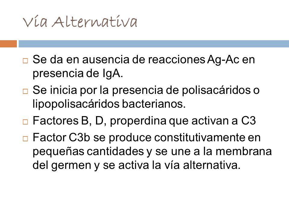 Vía Alternativa Se da en ausencia de reacciones Ag-Ac en presencia de IgA.