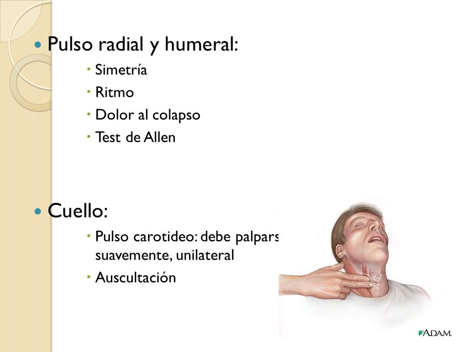 Pulso radial y humeral: