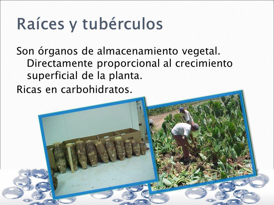 Raíces y tubérculos